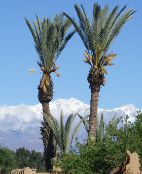 high atlas snow